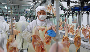 USDA points out 4% decline in Chinese chicken production Malaysia | Garra International