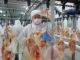 USDA aponta recuo de 4% na produção chinesa de carne de frango | Garra International