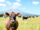New Zealand $16.7 million investment in bovine genetics program | Garra International